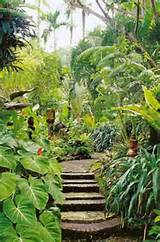 tropical landscaping ideas landscaping software ututotato