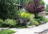 Calgary Garden Coach: a low maintenance front yard garden in Calgary