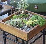 diy tabletop miniature garden shelterness