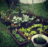 Small Home Garden Pictures, Photos, and Images for Facebook, Tumblr ...