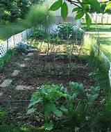 Small Vegetable Garden Design, Vegetable Garden Design