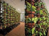 GREEN YOUR WALLS with Schiavello Vertical Gardens | Inhabitat - Green ...