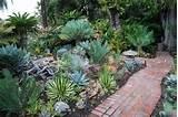succulent succulents pinterest