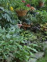 Shade container gardens | Shade plants /ideas | Pinterest