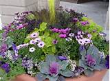 Container ideas | flowers/containers/etc | Pinterest