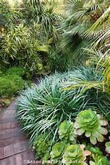 Path through tropical foliage California garden with Palms, bromeliad ...