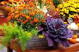 Fall Container Wow in 3 Easy Steps | The Garden Glove