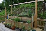 deck vegetable garden ideas growing vegetable gardens on a deck