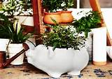 herb garden ideas indoor herb garden pinterest