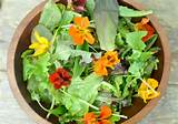 Great Salad Dressing recipes and Perfect Spring Gift Idea!   Boulder ...