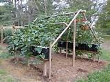 like this trellis seems like you could grow shade loving plants