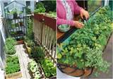 Tips for Starting an Apartment GardenREALfarmacy.com | Healthy News ...