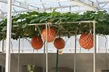 Vertical gardening ideas! | Garden | Pinterest