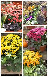 Fall Planters and Gardening Tips | Bright Bold and Beautiful