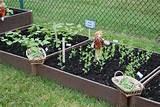 sagemont school garden school garden pinterest