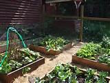 Pin by Fiona Mahri Maxwell on School garden ideas | Pinterest