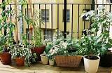 Small Apartment Balcony Vegetable Garden ideas