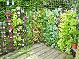secretos de la jardiner a urbana ecoosfera