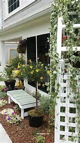 daisy-topiary-tree-with-garden-bench-and-arbor-in-small-narrow-garden ...