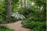 woodland location in the garden or in a natural woodland setting