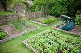 Above Ground Garden Ideas | Native Garden Design