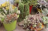 Succulent Design Ideas And Pictures Pictures to pin on Pinterest
