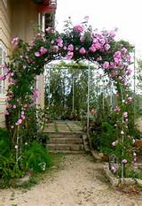 plants ideas climbing roses garden ideas rose arch varieties