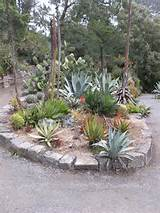 Cactus and Succulent Garden | Flickr - Photo Sharing!