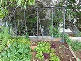 Vegetable Garden Ideas On A Budget How to start your own garden
