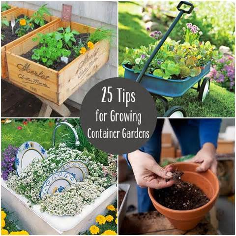 pinteresting container garden tips and ideas