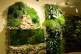 Indoor Vertically Mounted Garden & Dresser Garden