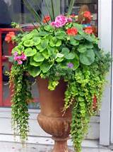 Container Gardening Tips | Garden | Pinterest