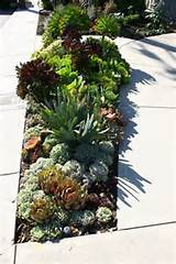 Succulent Garden #succulent - I LOVE this - maybe I should do this in ...