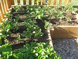 veggie garden ideas on a budget | vegetable gardening related images ...