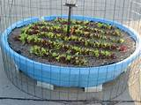 container gardening container vegetable gardening kiddie pool ideas