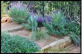 design east dallas xeriscape landscape design dallas landscape design ...