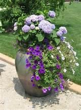 Vielfältige Ideen für Blumenkübel bringen einen Frühlingshauch ...