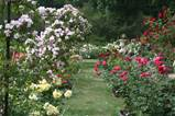 secluded space in rose garden landscaping ideas rose garden