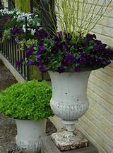 How to Make Amazing Spring Containers with Detroit Garden Works - Pith ...