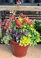 Garden Center & Plant Nursery Raleigh NC | Flower Nursery