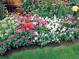 treasure valley flower garden | Garden Design Ideas | Pinterest