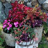 great container plants for shade