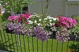 Planter Box Ideas Flowers - Hitez.comHitez.com
