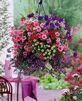 Judys Cottage Garden: Container Gardens | Flower ideas | Pinterest