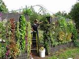 tv vertical gardening one how to grow vertically www youtube com
