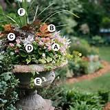 Container Garden Ideas. | Gardening | Pinterest