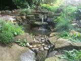 water garden ideas photos native garden design