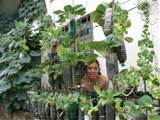 Me and my vertical vegetable garden in my frontyard