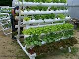 Pvc gardening | My Garden Ideas | Pinterest