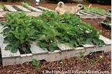 Strawberry Garden Planters Pallet gardening strawberries